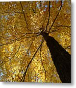 Golden Canopy Metal Print