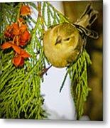 Golden Christmas Finch Metal Print
