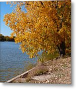 Golden Cottonwoods Metal Print