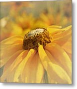Golden Crown - Rudbeckia Flower Metal Print