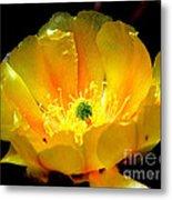 Golden Desert Flower Metal Print