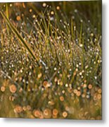 Golden Dew Drops Metal Print