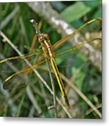 Golden Dragonfly At Rest Metal Print