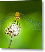 Golden Dragonfly On Perch Metal Print