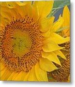 Golden Duo - Sunflowers Metal Print