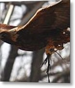 Golden Eagle Close Metal Print