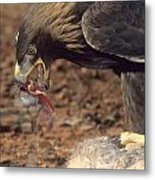 Golden Eagle Eats Metal Print