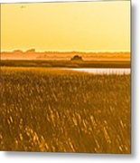 Golden End Of Day  Metal Print