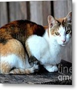 Golden Eyed Ferrel Metal Print