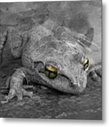 Golden Eyes Metal Print by Chasity Johnson