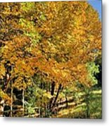 Golden Fenceline Metal Print