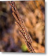 Golden Fern Spore Stem 6 Metal Print