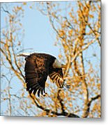 Golden Flight In April Metal Print