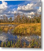 Golden Grasses Metal Print by Debra and Dave Vanderlaan