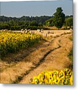 Golden Hour On Country Road Metal Print