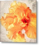 Golden Iris 2 Metal Print