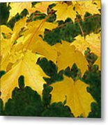 Golden Leaves Floating Metal Print