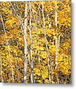 Golden Leaves In Autumn Abstract Metal Print