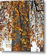 Golden Leaves In Mt Vernon Metal Print