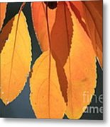 Golden Leaves With Golden Sunshine Shining Through Them Metal Print