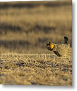 Golden Light On The Prairie Metal Print by Thomas Young