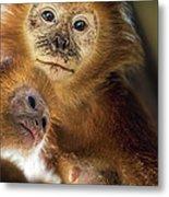 Golden Lion Tamarin Mother And Baby Metal Print