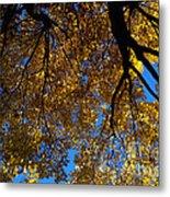Golden Maple 8 Metal Print