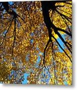Golden Maple 9 Metal Print