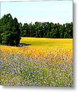 Golden Meadow Metal Print