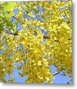 Golden Medallion Shower Tree Metal Print