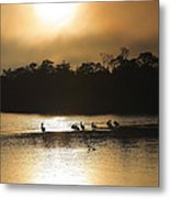 Golden Morning On Ding Darling Metal Print by Steven Ainsworth