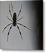 Golden Orb-weaver Metal Print