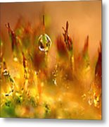 Golden Palette Metal Print by Annie Snel
