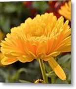 Golden Petals Metal Print