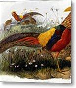 Golden Pheasants Metal Print