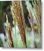 Golden Reeds Metal Print