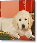 Golden Retriever Amongst Presents Metal Print
