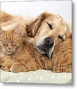 Golden Retriever And Orange Cat Metal Print