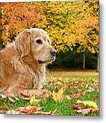 Golden Retriever Dog Autumn Day Metal Print