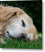 Golden Retriever Dog Sweet Dreams Metal Print