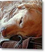 Golden Retriever Sleeping With Dad's Slippers Metal Print