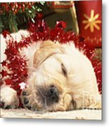 Golden Retriever Under Christmas Tree Metal Print