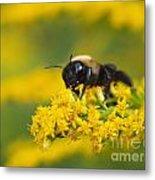 Golden Rod And Bumblebee Metal Print