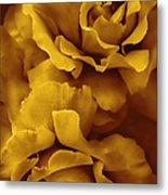 Golden Yellow Roses Metal Print