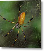Golden Silk Spider 10 Metal Print