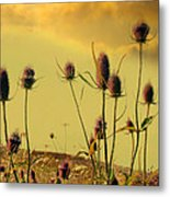 Teasels Reach For The Golden Sky Metal Print