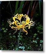 Golden Spider Lily Metal Print