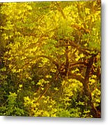 Golden Spring Metal Print