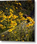 Golden Spring Flowers  Metal Print