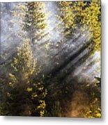 Golden Sunbeams Metal Print
